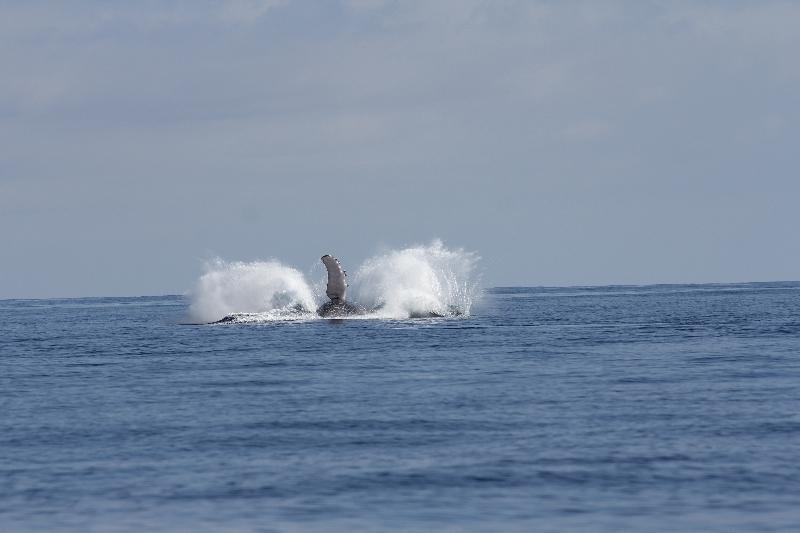 baleine101