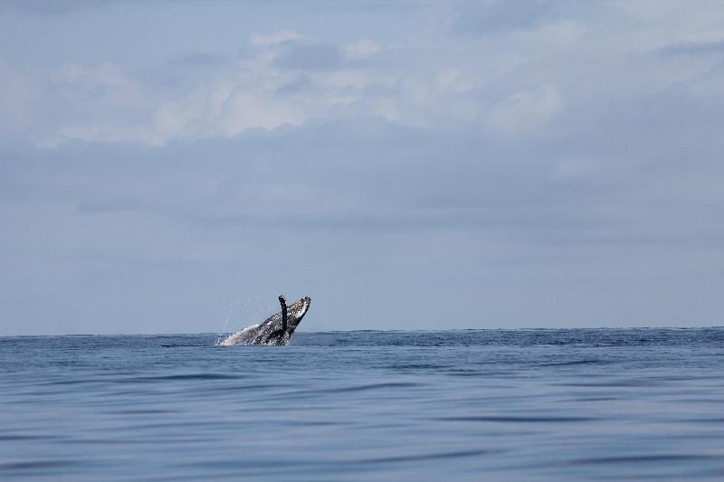 baleine11