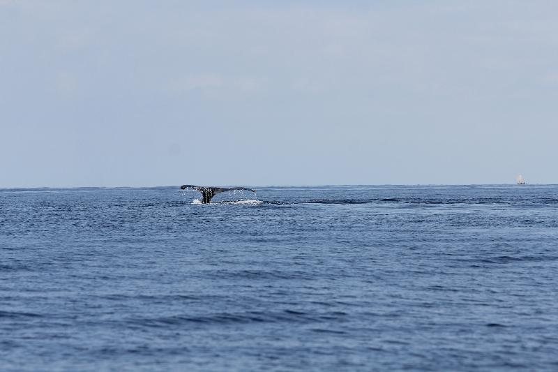 baleine6