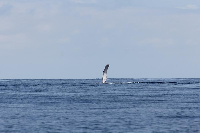 baleine8