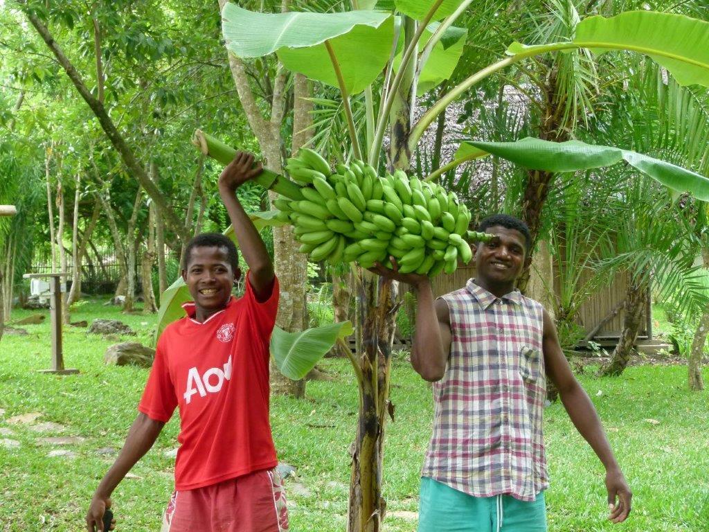 bananesdujardin