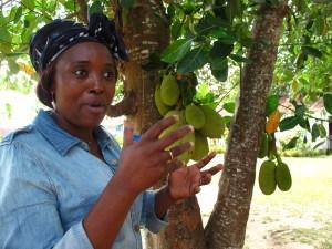 Mado plantation Millot (13)
